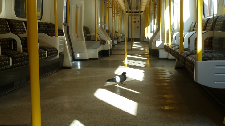 Even the pigeons in London travel by London underground these days!